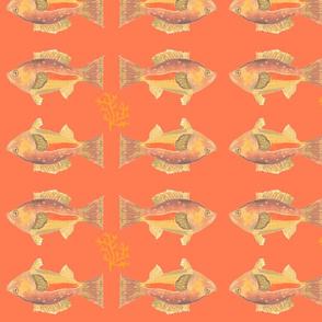 Heathers Orange Fish-ch-ed