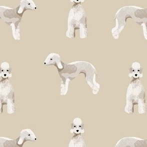 bedlington terrier dog breed pet fabric tan