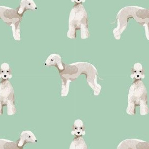 bedlington terrier dog breed pet fabric mint