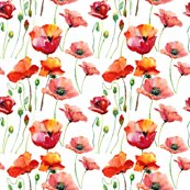 Rcoral_poppies_shop_thumb
