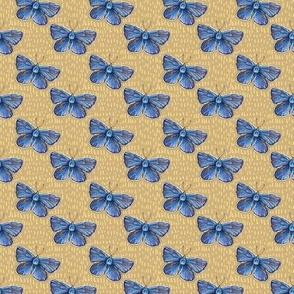 Karner blue butterfly , tweedy goldenrod