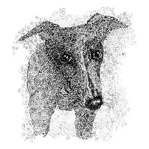 Curly whippet-B&W