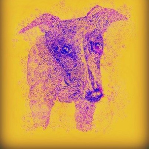 Curly whippet-PurpleOnGold