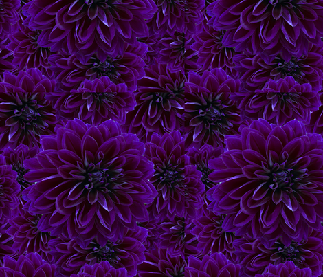 Violet Mums fabric by lacartera on Spoonflower - custom fabric