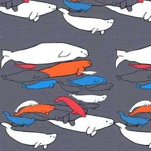 Beluga whales pop
