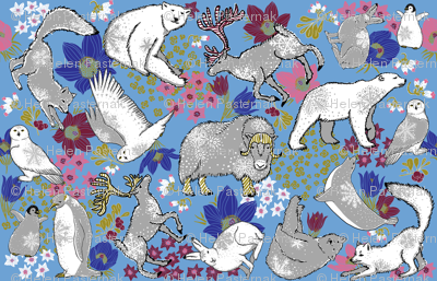 Arctic Summer on boy blue