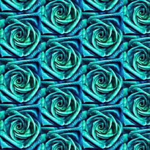 blue-rose macro
