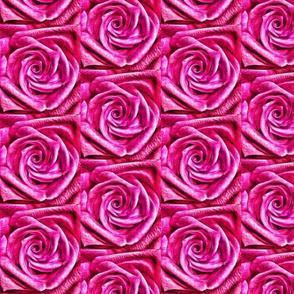 pink-rose macro