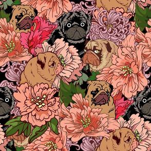 Because  Pugs