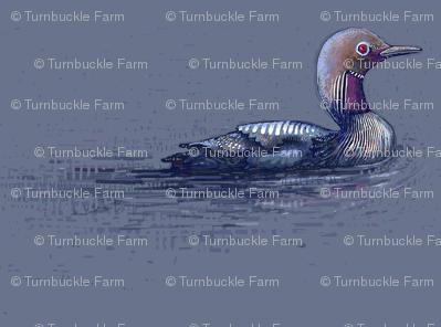 arctic loon blue