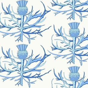 Scottish Garden Thistle, Blue