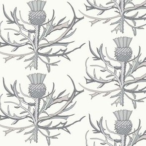 Scottish Garden Thistle, Cream  Grey