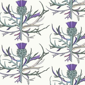 Scottish Garden Thistle, Cream