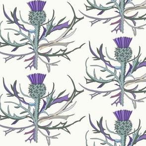 Scottish Garden Thistle, Cream
