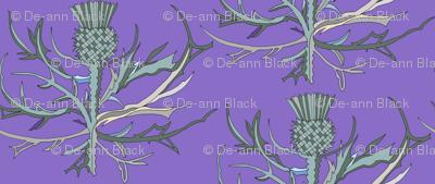 Scottish Garden Thistle, Purple