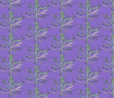 Rscottish-garden-thistle-purple-586-copy_shop_preview