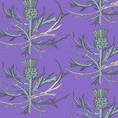 Rscottish-garden-thistle-purple-586-copy_shop_thumb