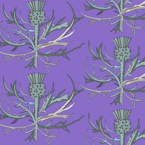 Scottish Garden Thistle, Purple