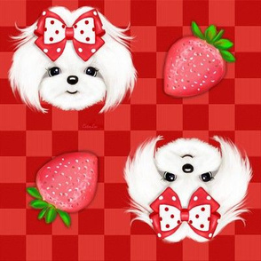 Maltese red Strawberry M