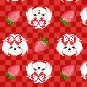 Maltese red Strawberry S