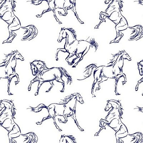 Blue Horse Sketches