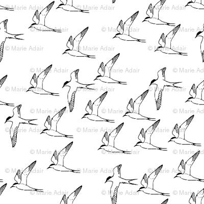 Arctic Terns in Flight mini