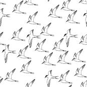 Rrarctic-terns-in-flight-mini_shop_thumb
