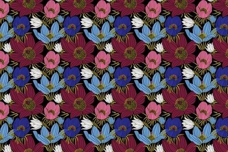 Rarctic-pasque-flowers-mix-black_shop_preview