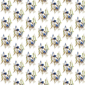 Blue wren alternately