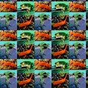 Tree Frogs & Newts-B
