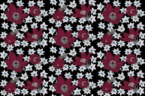 Arctic_red_pasque___white_saxifrage_flowers__black__shop_preview