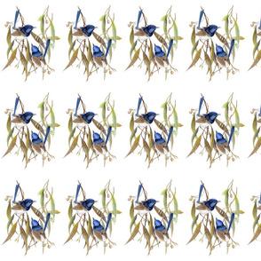 PRT307 Blue Wren A4 ADJ2 150 NoSig