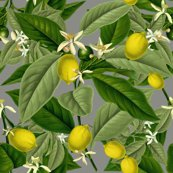 Lemon-botanical-earl-grey-faux-canvas-peacoquette-designs-ciopyright-2017_shop_thumb
