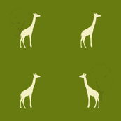 Giraffes on an Olive Field