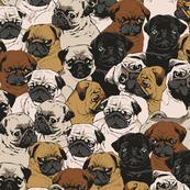 Social Pugs