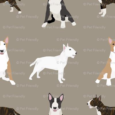 bull terrier mixed coat colors simple terriers dog breed fabric medium