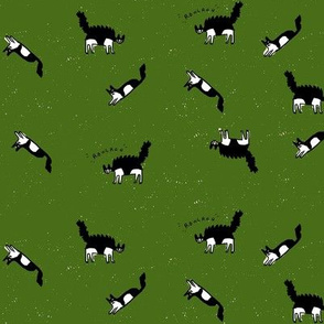 kitten green