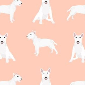 bull terrier white coat simple dog breed fabric peach