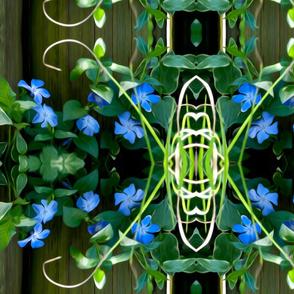 blue bloomers horizontal