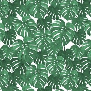monstera cheese plant painted tropical palms botanical tropical palm springs trendy plants cactus succulents plants - medium