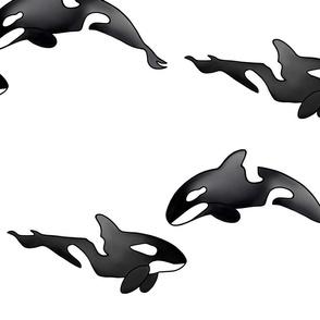 Killer whale, Large