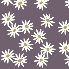 daisies - purple flowers