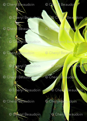 Rnight-cactus-bloom-3-2017-103_7873_preview