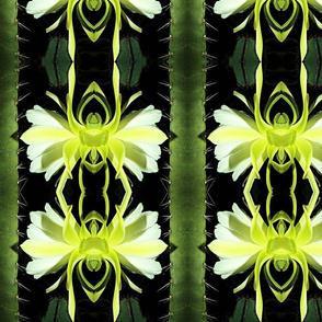 Night Cactus Bloom