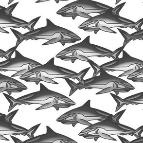 Shark invasion, grey
