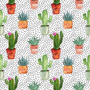 Dotty Cactus