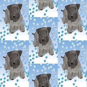 Cesky Terrier with Paw Prints