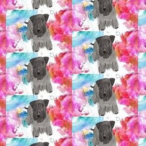 Cesky terrier Colorful