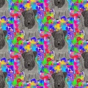 Cesky terrier Color background