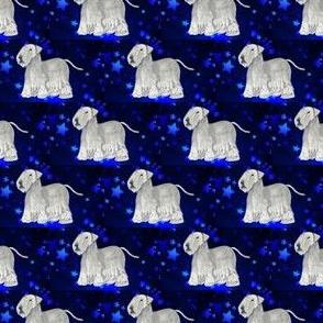 cesky terrier with stars